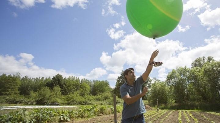 Microsoft unterstützt fünf neue KI-Projekte in den Bereichen Umweltschutz, Artenschutz und Nachhaltigkeit
